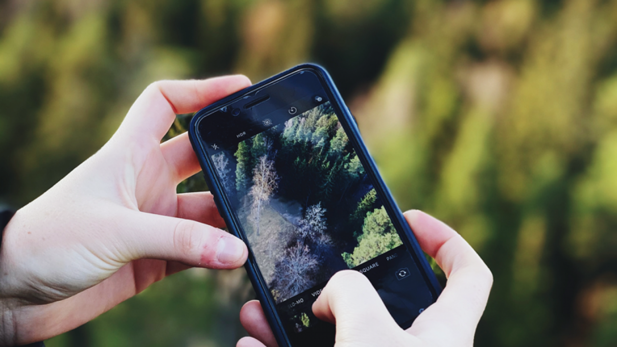 Close-up of hands photographing forest with smartphone