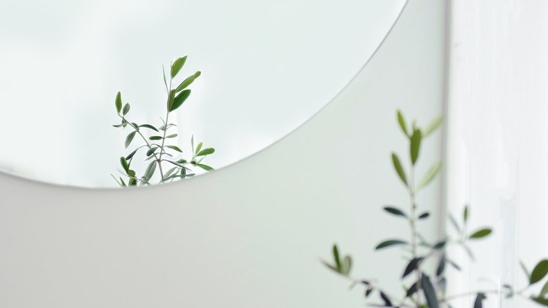 A plant and a round mirror